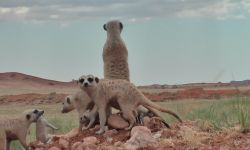 Meerkats and Market Behaviour - Thoughts on October's stock market fall